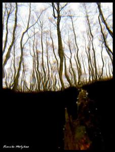 Trees  by Veronika Matějková