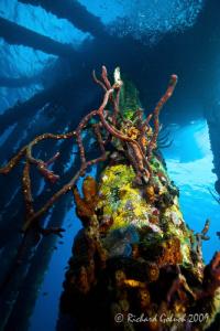 Salt Pier-Bonaire-Canon 16-35 mm by Richard Goluch