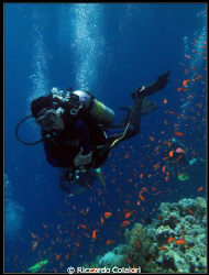 My Wife at Jackson Reef - Canon Powershot G10 + WP-DC28 by Riccardo Colaiori