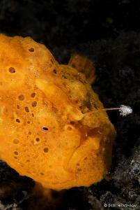 Fishing Froggy by Debi Henshaw