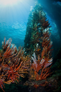 The Busselton Jetty.  This area of the jetty is soon to b... by Mick Tait