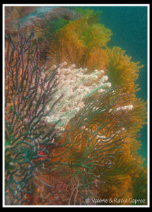 Colourful coral by Raoul Caprez