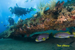Sweetlips and Divers @ USS Liberty Wreck by Taco Cheung