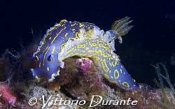 Nudi on wreck of Laura C by Vittorio Durante