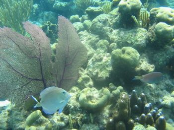 I was snorkling in the Cayman Islands, took this in natur... by Ronald R. Marshall