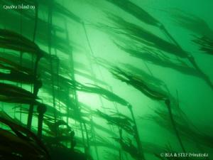 Bulb Kelp. Quadra Island, BC. Canon G10. by Bea & Stef Primatesta
