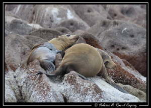 Taken in Los Islotes, Cortez sea by Raoul Caprez