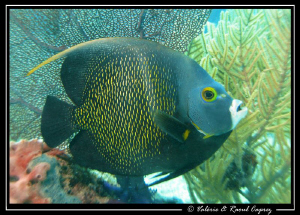 Taken in Cozumel with a Canon G9. by Raoul Caprez
