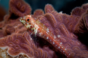 Small fish off Rottnest Island. First time out with a new... by Mick Tait