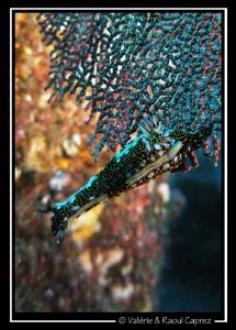 Taken in the Cortez sea. Canon G9. by Raoul Caprez