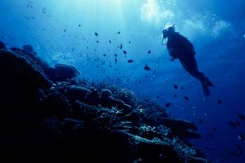 Diver and Reef in the Coral Sea. Used Kodaks underwater e... by Alan G Miller
