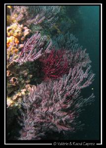 Nice coral garden. Canon G9 by Raoul Caprez