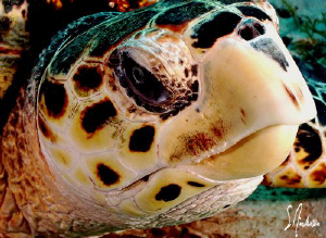 Yep - another turtle image..... They were everywhere duri... by Steven Anderson