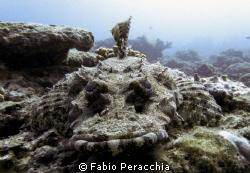 Croc by Fabio Peracchia