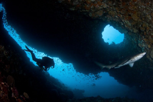A rebreather diver enters the Grey Nurse Shark Cave.  Can... by Mick Tait