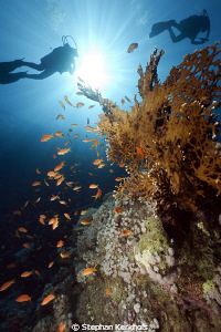 Underwater scenery in Ras Mohammed. by Stephan Kerkhofs
