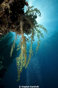 Beautiful softcoral taken at Shark Observatory, Ras Moham... by Stephan Kerkhofs