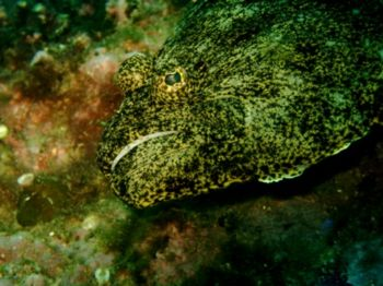 """""""Lenguado"""". This photo was taken with a Sealife Reefmaste... by Andrés Sendra R."""