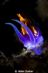 nudi on fire by Victor Zucker