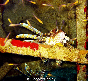 While on a wreck dive at Freeport Bahamas, I looked into ... by Bonnie Conley