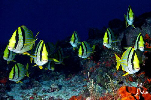 My favorite photogenic friends of Paso Cedral off the isl... by Steven Anderson