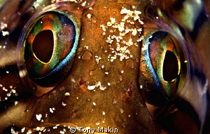 Speckled Clinid eyes by Tony Makin