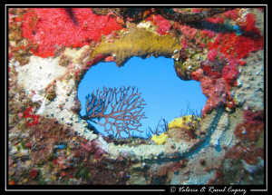 Nice view during a dive on a wreck. by Raoul Caprez