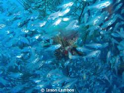 glass fish m 1030 sw by Iason Lambos