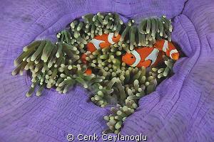 family.   by Cenk Ceylanoglu