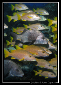 Taken with a Canon G9 in Cozumel. by Raoul Caprez