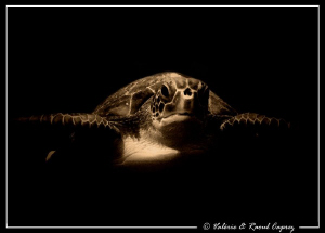 This turtle tried to eat my wide angle lens ! by Raoul Caprez