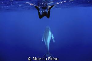 snorkeler and humpback whale. Vava'u Tonga. Nikon D300 wi... by Melissa Fiene