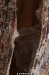 Clam, not sure skeleton or alive (Shrimp) by Eschelle Knoesen