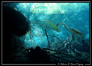 Prehistoric dream in a cenote