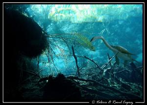 Prehistoric dream in a cenote (Yucatan-Mexico) by Raoul Caprez