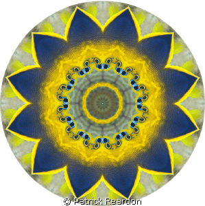 """Sunflower"" made from a Kaleidoscopic image of a fish. by Patrick Reardon"
