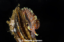 NUdi and clam1 by Eschelle Knoesen