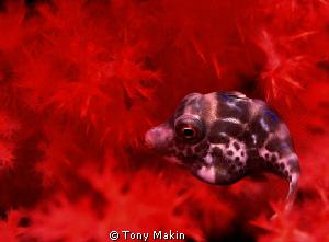 File fish? by Tony Makin