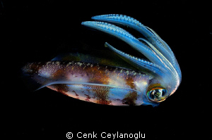 Colors of the night.  a night dive shot.    by Cenk Ceylanoglu