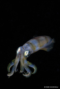 """Pure Magnetism""  Bigfin reef squid - another from my ser... by Debi Henshaw"