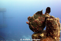 Frogfish on the Salem Express by Michael Gallagher