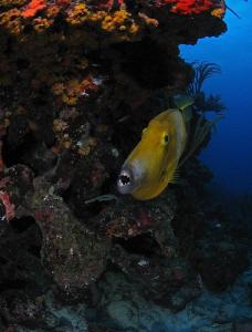 File fish by Juan Torres