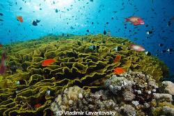 Balancing the light. Jackson reef in the Strait of Tiran,... by Vladimir Levantovsky