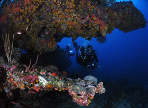 Divers at Blonde Rock, BVI. by Juan Torres