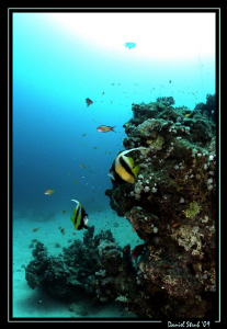 A great dive in El Quseir, Mövenpick house reef. by Daniel Strub