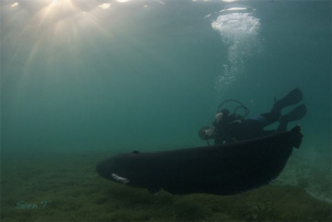 Ray & Swiss lake's monster Wells Catfish, fantastic dive! by Sven Tramaux