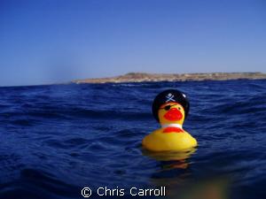 Captn. Quack Sparrow! by Chris Carroll
