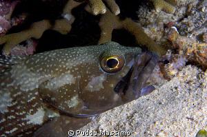 fish feeding at night dive,nikon d2x 60mm macro by Puddu Massimo