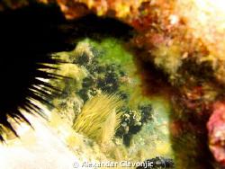 Taken with intova Ic600 5-6 meters depth(snorkeling). by Alexandar Glavonjic