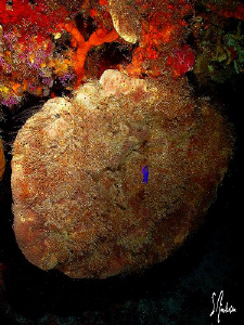 There are lots of old sponges still intact after all of t... by Steven Anderson